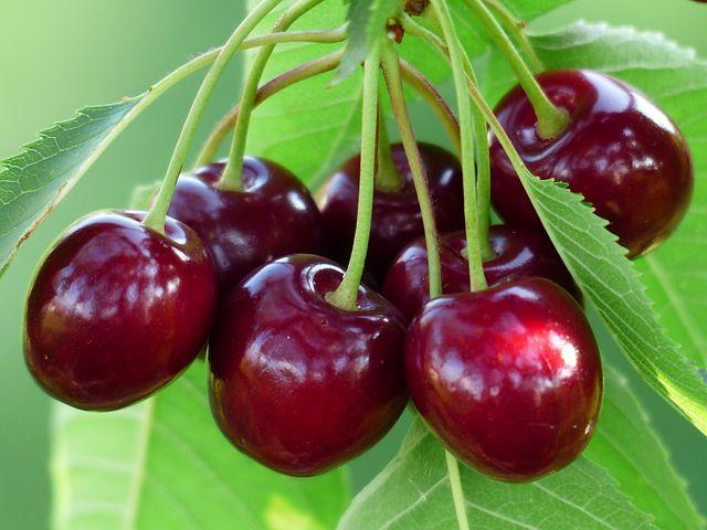 Quel arbre fruitier choisir pour son jardin ?