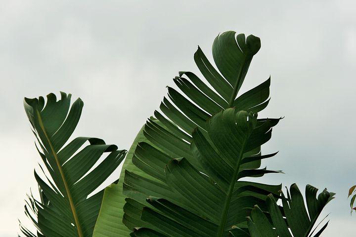 Quelles plantes poussent rapidement ?