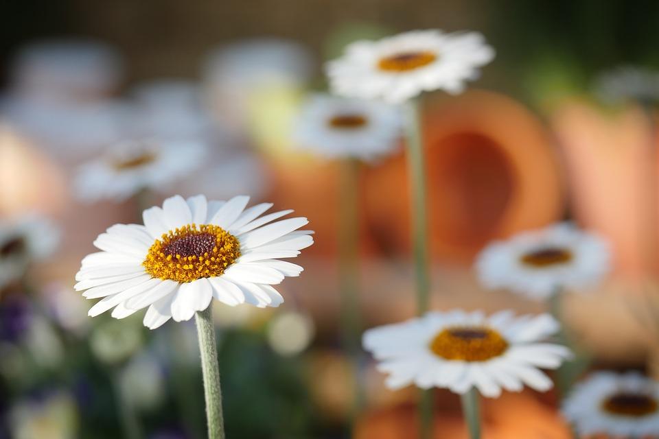 Que faut-il prévoir pour créer un magnifique jardin ?